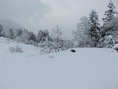 12/5 雪
