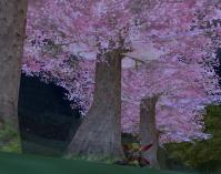12040202今年の桜