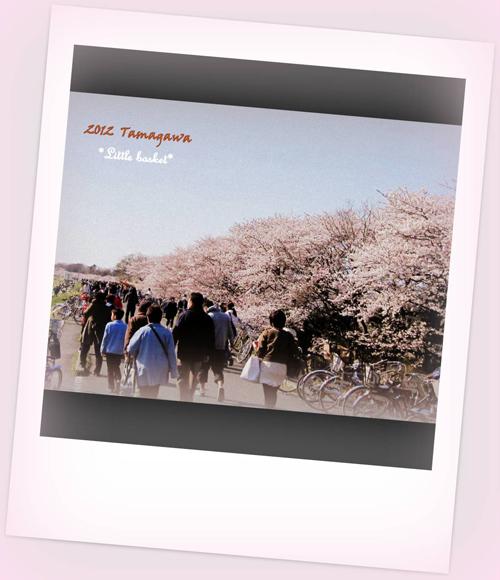 ブログ用2012桜