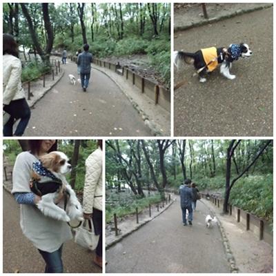 cats-1_20121102082652.jpg