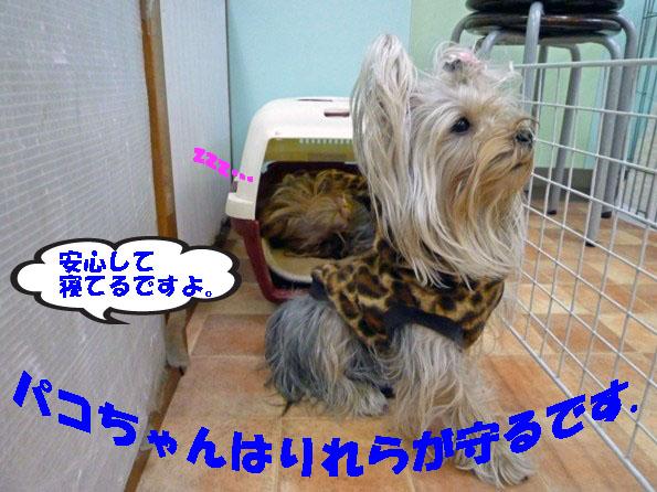 006_20120323041456.jpg