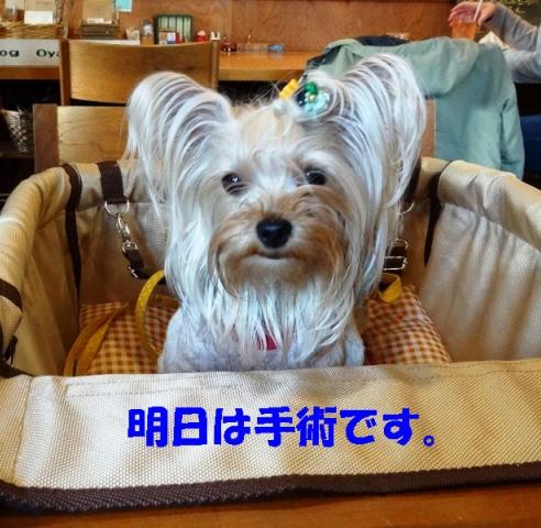 14_20120330043849.jpg