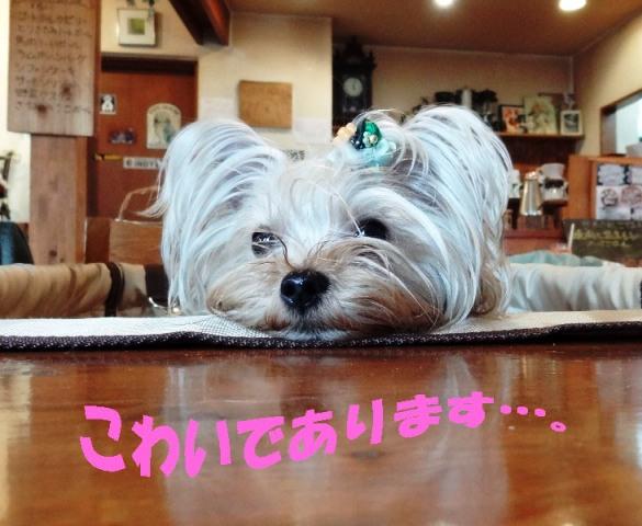 15_20120330043849.jpg