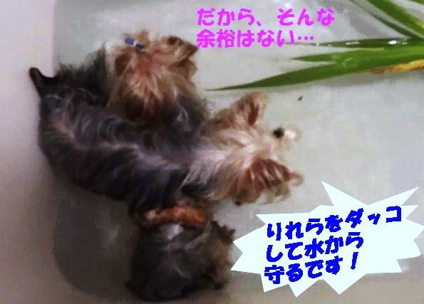 菖蒲湯 (4)