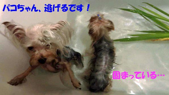 菖蒲湯 (2)