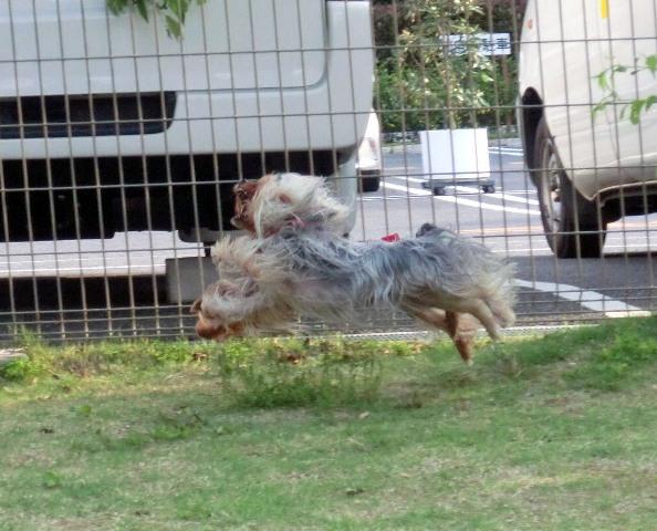 8W飛行犬2