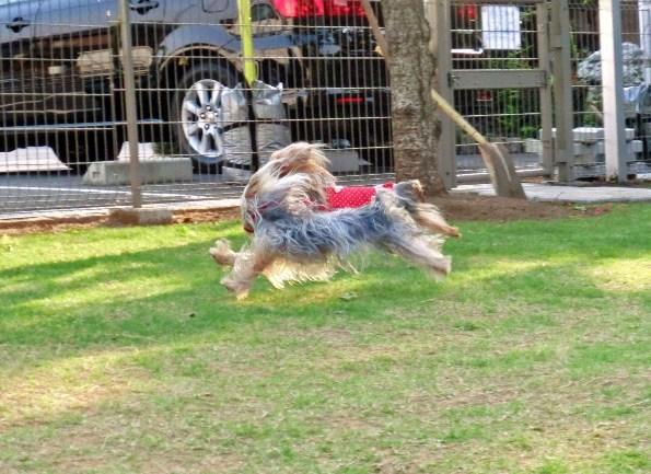 7W飛行犬1
