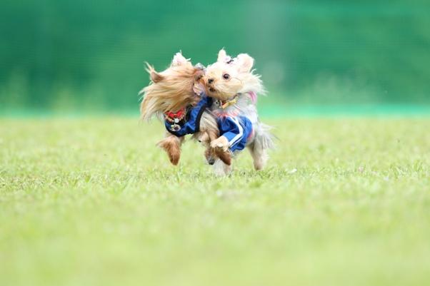 W飛行犬 (2)