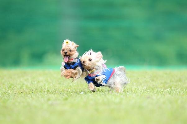W飛行犬 (1)