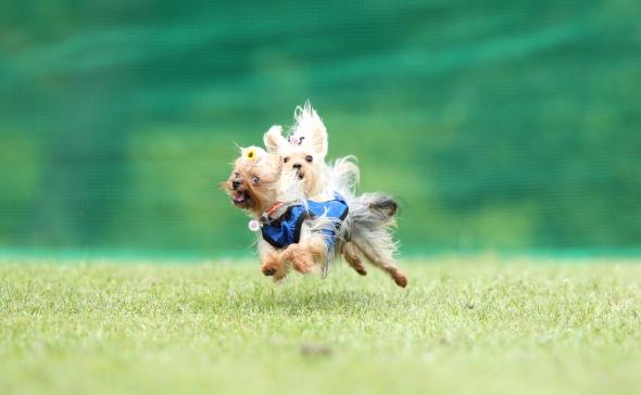 W飛行犬 (5)