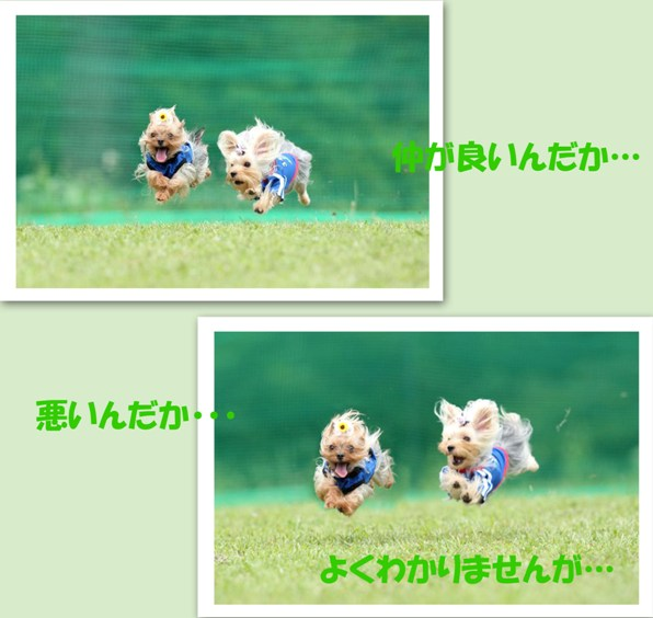 W飛行犬 (7)