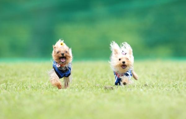W飛行犬 (6)
