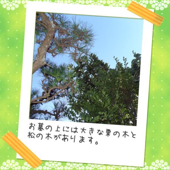栗と松の木 - コピー