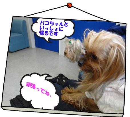 2_20120331042143.jpg