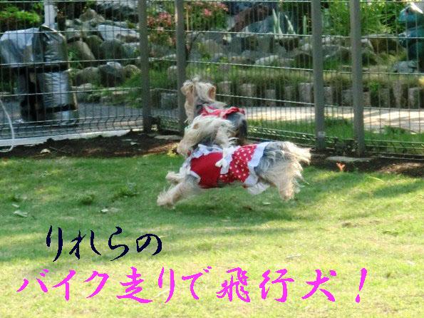 3_20120516160408.jpg