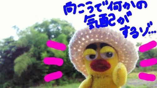 2011年夏の思い出4☆