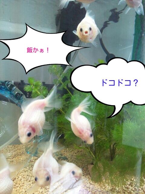 PhotoHenshu_20121031112510.jpg