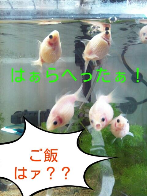 PhotoHenshu_20121031113254.jpg