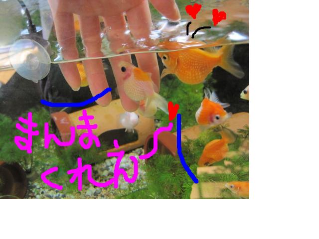snap_lisasaichi9631_20128312569.jpg