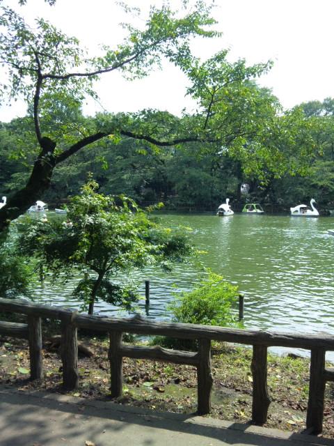 井の頭公園のスワン