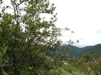 fc2blog_20120928200943e91.jpg