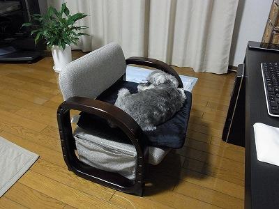 椅子借りてます