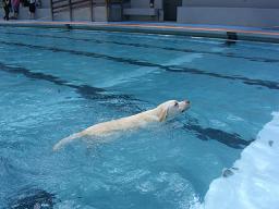 きいちゃん泳ぎ2