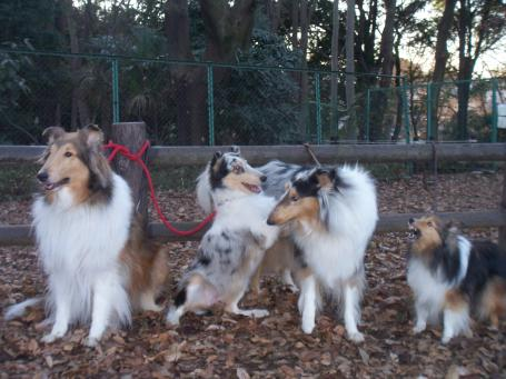 クレア仔犬時代