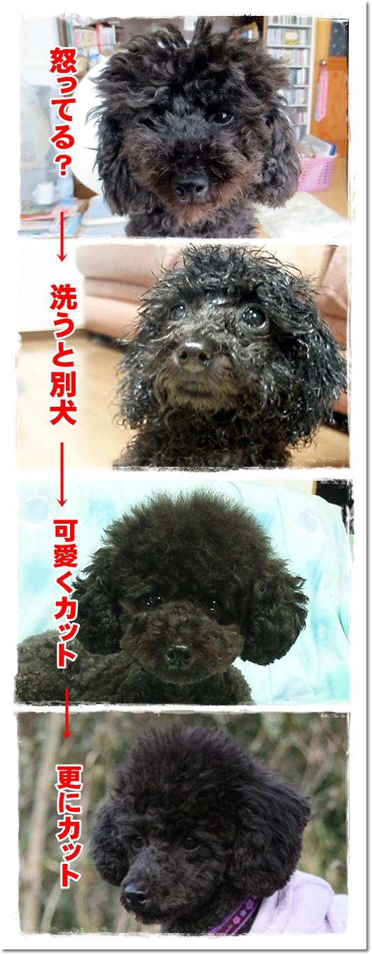 2012・11・11・変顔アン