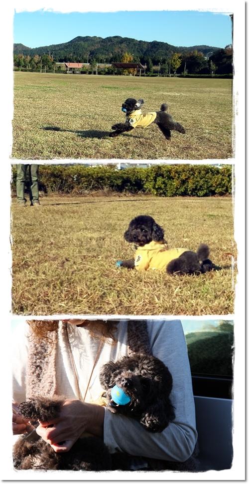 2012・11・17・紅葉狩り