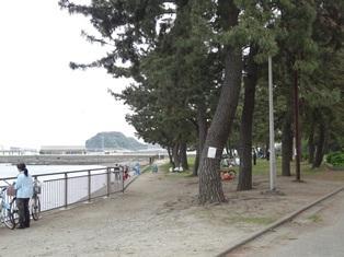 DSC04384.jpg