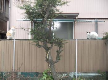 おばちゃん家の猫