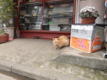 猫町猫通り