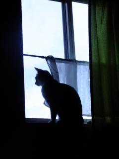 窓辺の美少女?