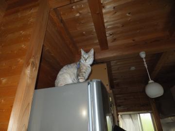 冷蔵庫の上から