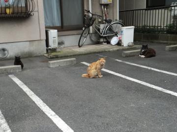 猫通りの猫たち