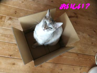 箱いただき!
