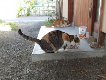 2010 9 9 ミヤオとミケ子