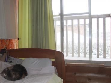 2012 3 2 外は雪でも・・