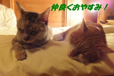 仲良くおやすみ