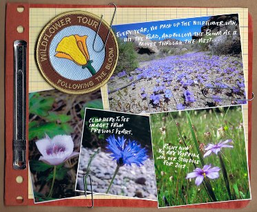 wildflowertour.jpg