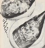 タイラギのヒモドリア図