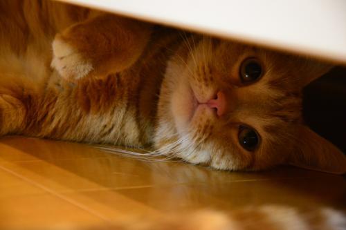 隠れてるんだから