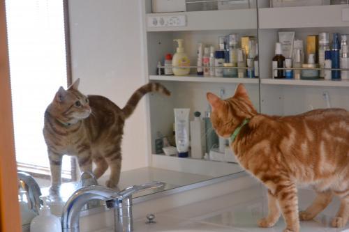 鏡越しにこんにちは