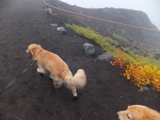 2013-10-7富士宮口コース 014