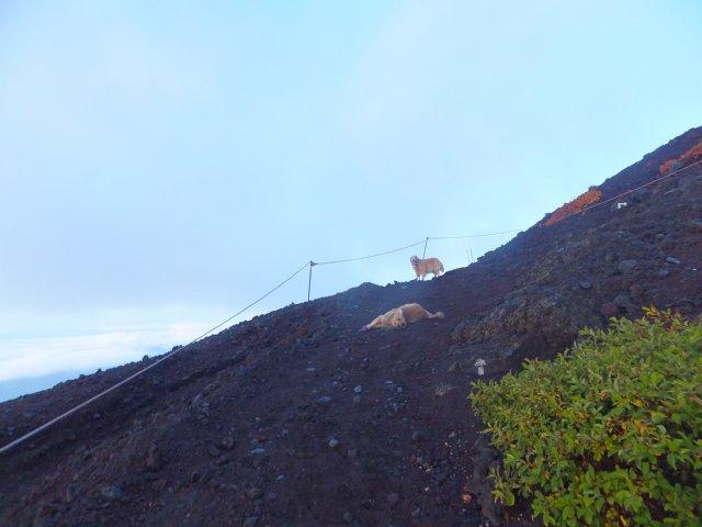 2013-10-7富士宮口コース 051