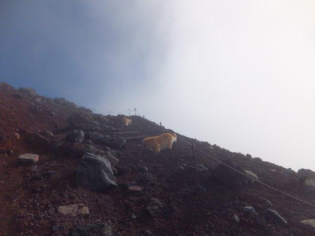 2013-10-7富士宮口コース 129