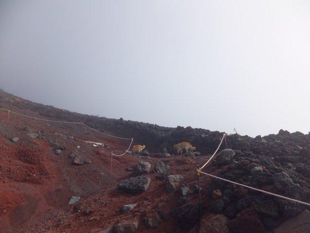 2013-10-7富士宮口コース 145