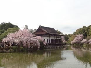 平安神宮の神苑8