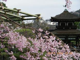 平安神宮の神苑9